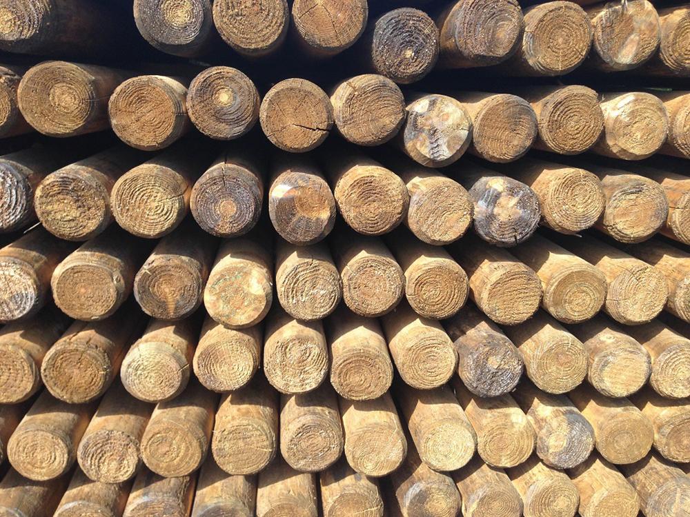 Zaunpfähle Holzpfahl Angespitzt Pfahl Rundpfahl Kiefer HaGa® 150cm Höhe 1 Stück