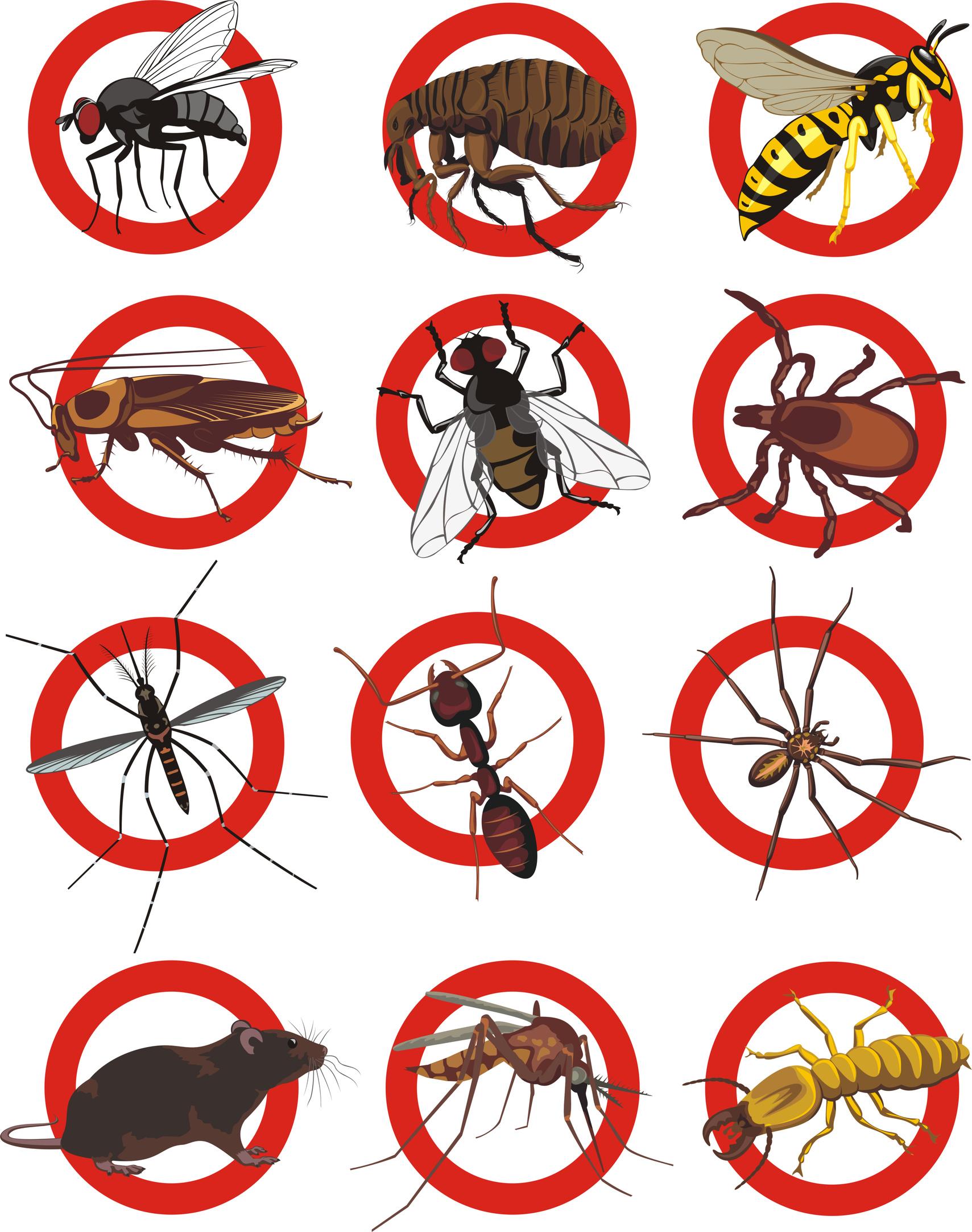 Insektennetz in 75cm Breite, grau, (Meterware) Moskitonetz, Fliegennetz