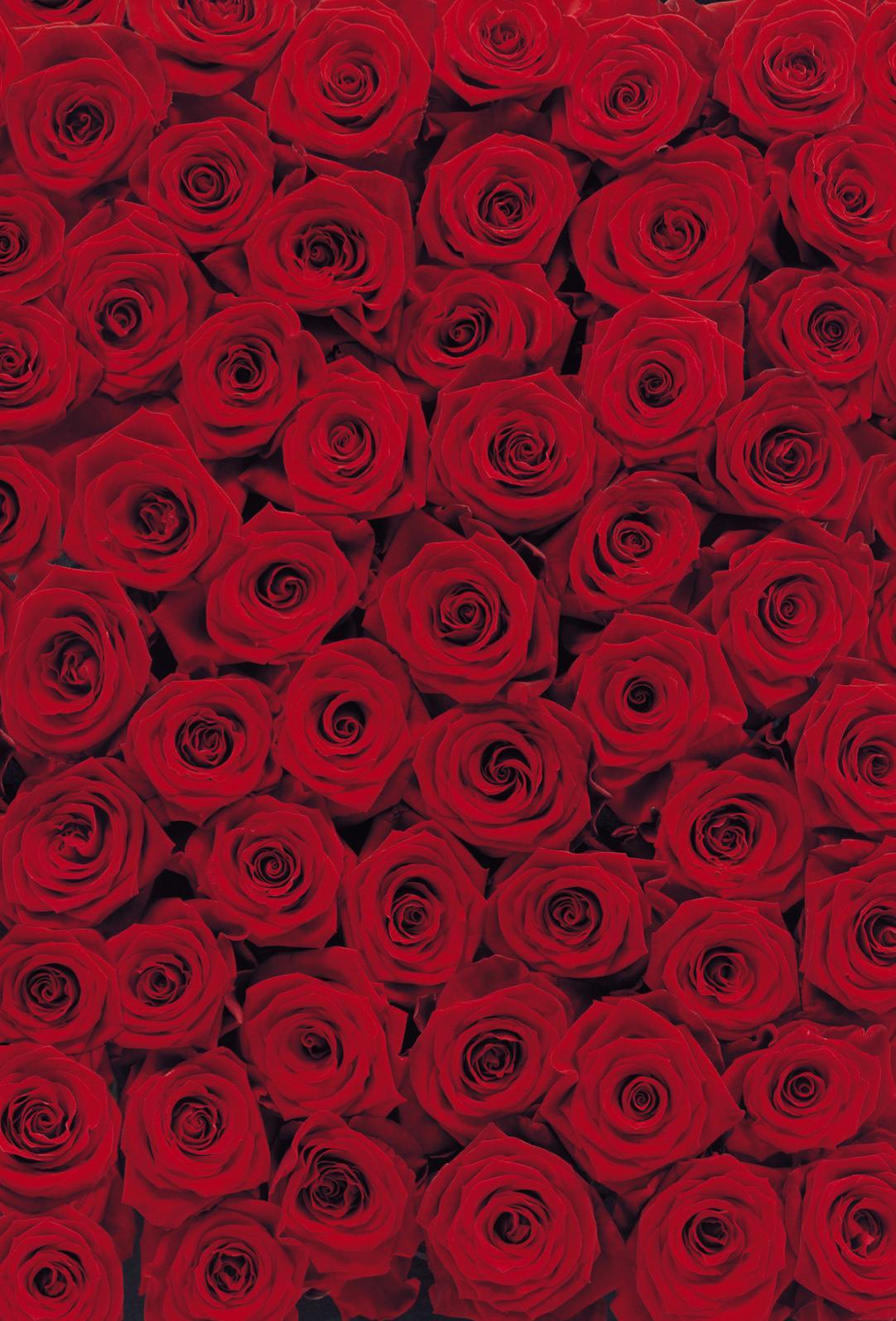 Fototapete deko bild tapete wand rosen foto design roses for Tapete rosen