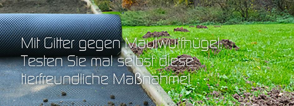 Mit Gitter gegen Maulwurfhügel: Testen Sie mal selbst diese tierfreundliche Maßn