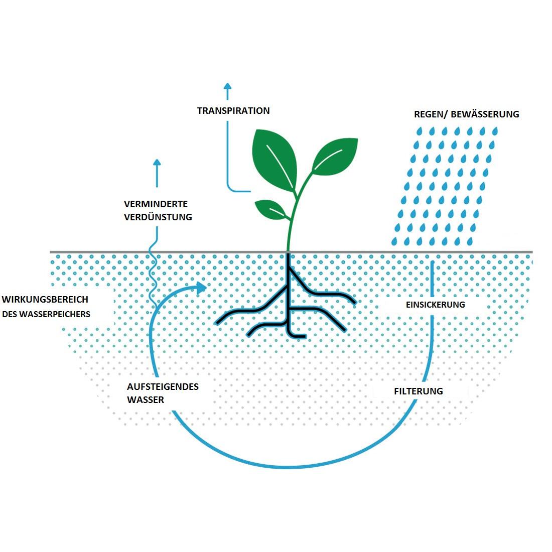 Wasserspeicher 250ml langzeitwirkung hydro stabilisator for Hydropflanzen versand